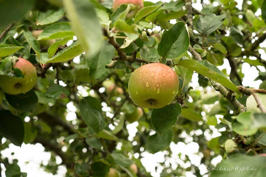 Äpfel- ZimtkeksundApfeltarte.com